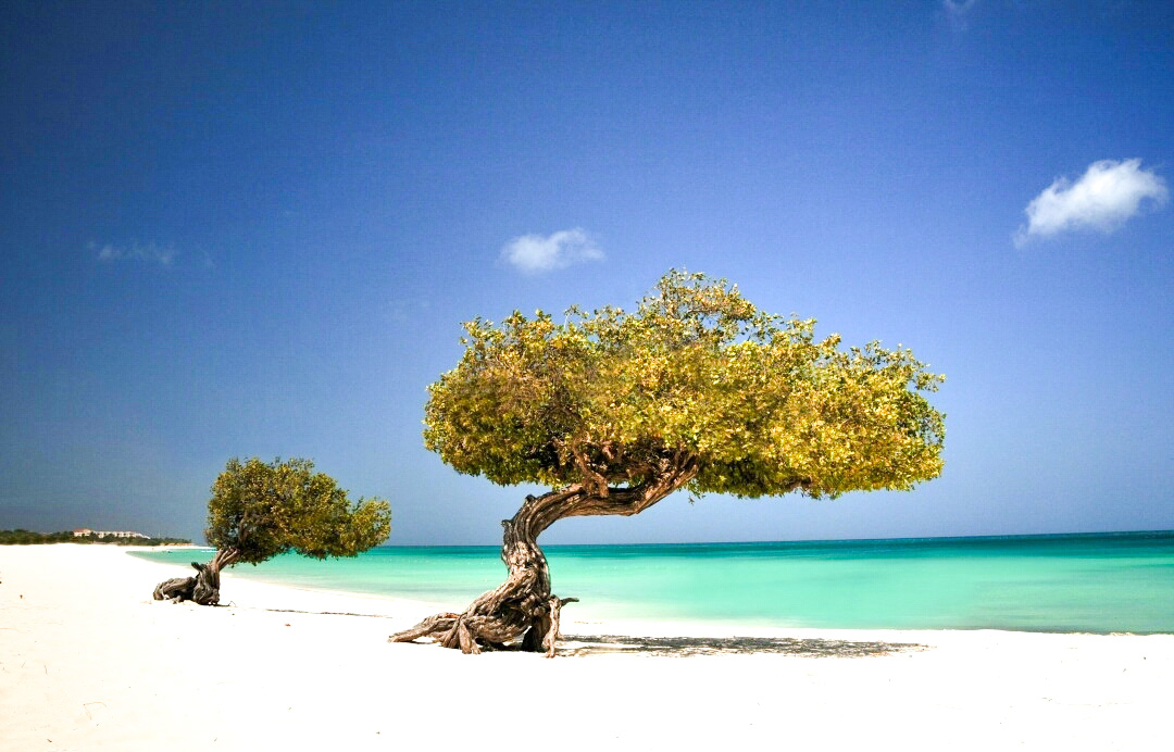 Las 5 playas desconocidas mas lindas deAruba